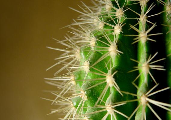 Apropó, növények: a kaktusz sem a legjobb választás, ha növényeket szeretnél vinni otthonodba. Ez ugyanis - mint tüskés, szúrós dolog - a szerelem elüldözője lehet.
