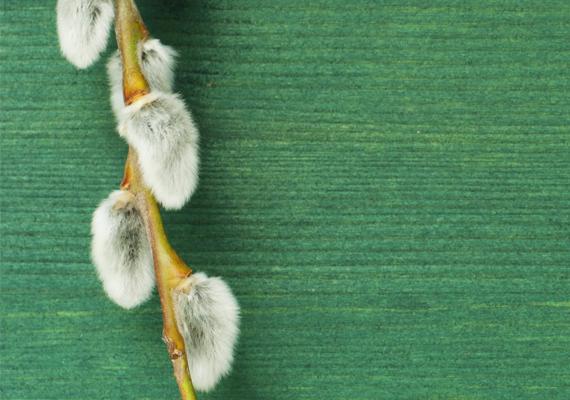 A barkaszenteléshez több babona is kötődik, például villámcsapás távoltartása a háztól, de a régiek szerint egészségvédő is van: a húsvét előtti vasárnap, azaz virágvasárnap megszentelt barka egy szemét hazafelé a templomból lenyelve a torokfájás és a gyomorbántalmak elkerülnek.