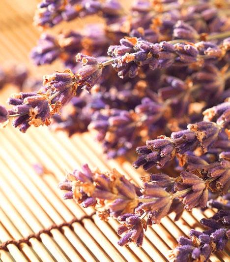 LevendulaBizonyos gyógynövények és a levendula is működhet bőséget bevonzó tárgyként. Ráadásul ez a növény nemcsak az anyagi jólétet hozza el az életedbe, de csodás illata is van.