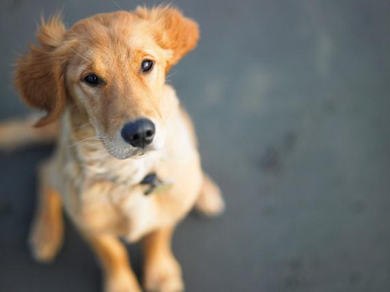 A kutya az ezotériában a hűség, a bátorság, a kitartás állata, mindemellett a farkashoz hasonlóan útmutató szerepet is tulajdonítanak neki. Jelenléte a pszichés problémáktól óv meg, és hatékonyan gyógyítja azokat, mint például a depresszió vagy éppen a poszttraumás stressz, ezáltal pedig segít kivédeni számos lelki eredetű szervi betegséget is. Az agresszió kezelésében szintén jól bevált módszer az úgynevezett kutyaterápia.