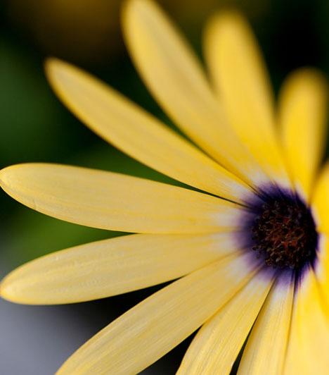 Disznó  Ha a Disznó évében születtél, nemes egyszerűséggel tegyél egy sárga virágot a szerelemsarkodba. Művirág is lehet, így is elhozza a szerelmet az életedbe.