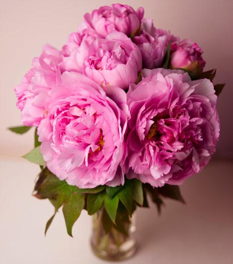 Majom  Ha Majom a kínai jegyed, tegyél egy csokor pünkösdi rózsát a szerelemsarokba, hogy becsalogasd az ideális társad az életedbe. A növényt képpel is helyettesítheted.