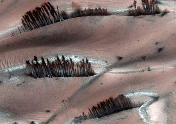 Vannak növények a Marson? Valószínűleg gáz vagy víz formálta a felszínből azokat az alakzatokat is, melyek első látásra fáknak tűnnek.