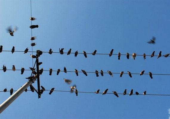 A madarak hosszabb távra is jósolnak, ha például a fecskék későn utaznak el, enyhe lesz a tél.