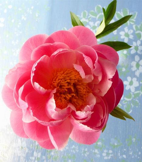 Bazsarózsa  A bazsarózsa az egyik legerősebb szerelemhozó virág. Nyílása a nőiességet és a szerelem kibontakozását szimbolizálja. Akár az élő növényt, akár képmását teszed a lakásodba, biztos sikerre számíthatsz a szerelemben.  Kapcsolódó cikk: Mi vár rád a szerelemben? Így jósold meg! »