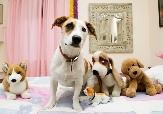A karácsonyi vacsora után menj ki az utcára - amerről először hallasz kutyaugatást, arról fog érkezni a jövendőbelid. Legalábbis a babona szerint.