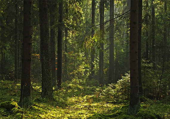 Az álomban szereplő sűrű, sötét erdő megcsalásra figyelmeztethet.