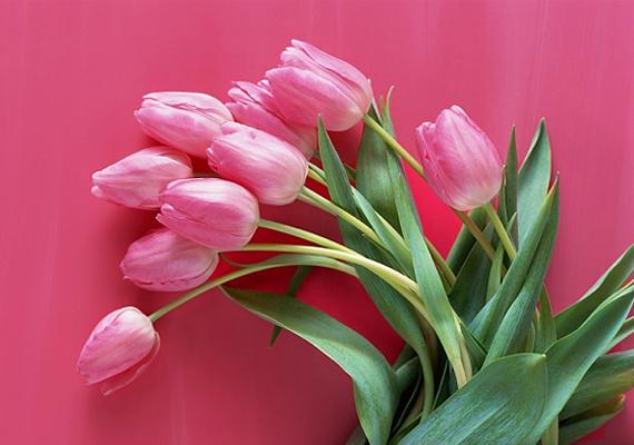 A virágokat is segítségül hívhatod, ha a szerelemmel kapcsolatos kérdésed adódik. Használd Virágjóslás szolgáltatásunkat!