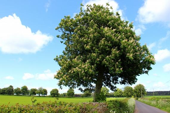 Gesztenyefa                         A gesztenyefa képes a legtöbb szerető erőt sugározni magából. Ha sérült a lelked, szorongsz, vagy magányosnak érzed magad, ez a fa segít abban, hogy helyrebillentsd a belső nyugalmadat.