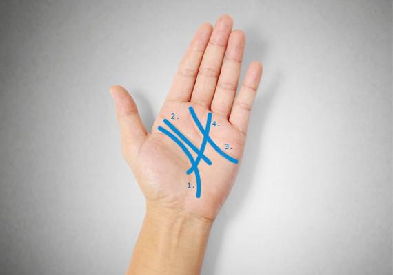 A jóslás elvégzéséhez elengedhetetlen, hogy tudd, melyik vonal mit jelöl a tenyereden. A négy fő vonal a következő:                         1.: életvonal,                         2.: fejvonal,                         3.: szívvonal,                         4.: sorsvonal.