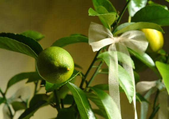 A termést hozók a bőség szimbólumai, így a citrom- és a narancsfa is.