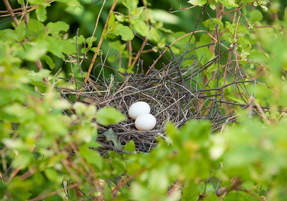 Az álomban megjelenő madárfészek, ha tojás is van benne, gazdagságot jósol. Vigyázat, mindez tojás nélkül épp az ellenkezőjét jelentheti.