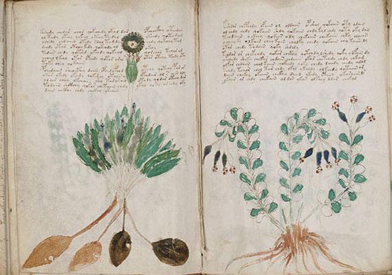 A feltételezések szerint a 15. század elején keletkezett Voynich-kézirat ismeretlen nyelven írt könyv, amelynek tartalmát a mai napig nem sikerült megfejteni. Nevét egykori tulajdonosáról, Wilfrid Michael Voynich amerikai könyvkereskedőről kapta, akihez 1912-ben került.