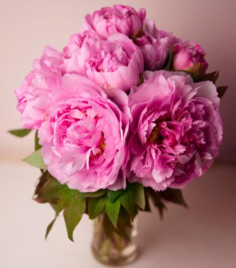Shiroku  Ha a Zöld fa a jegyed, ületess pünkösdi rózsát. Ez a női szépség, a termékenység és a szerelem szimbóluma. Segít a lelki béke megtalálásában: abban, hogy elengedd a múlt sebeit és elfogadd a jelen helyzeted, így helyet készíthess az életedben az újnak.  Kapcsolódó cikk: Milyen férj válik a férfiból? »