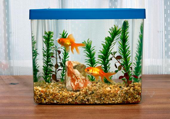 A hal leginkább a pénzt vonzza, így az akváriumnak vagy a halszobrocskának a dolgozószobában van a helye. Semmiképpen se tedd a hálószobába, mert elúsztathatja a boldogságot.