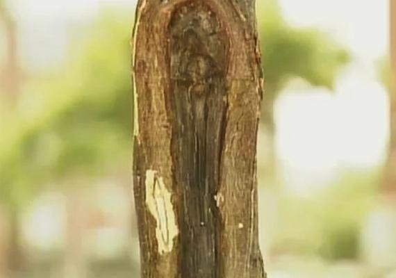 2012-ben egy másik fatörzsön is Szűz Mária-jelenésnek vélt képet fedeztek fel New Yorkban, Sleepy Hollow-ban, azt követően, hogy egy mexikói férfi autóbalesetet szenvedett a környéken. Ha jól megnézed, arcvonások vehetőek ki a képződményen.