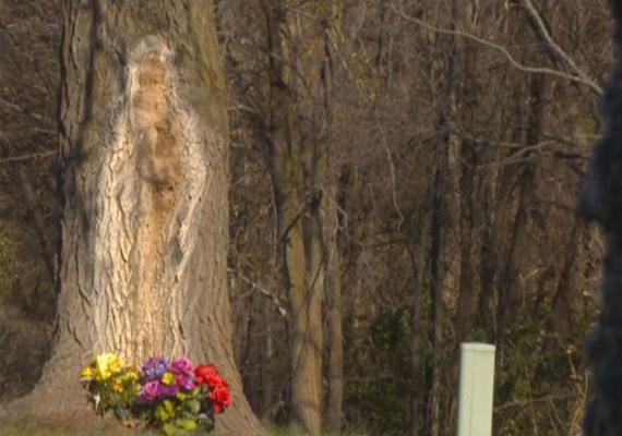 2014 novemberében Iowában, Polk Cityben a 3. utca és a Bridge Road között fedezték fel az egyik fa törzsén azt az alakot, amelyről egyesek úgy tartják, Szűz Máriához hasonló, mások inkább Jézust látják benne. Szkeptikusok szerint mindössze pareidolia jelenségről van szó, vagyis emberi alakot, arcot idéző alakzatokba az emberek hajlamosak valóban belelátni emberalakokat és arcokat.