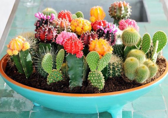 Bár a növények minden lakásban jól mutatnak, nem mindegy, hogy milyeneket választasz. A tüskés, szúrós fajtákról úgy tartják, érdemes tőlük megszabadulni, mert elriaszthatják a szerencsédet.