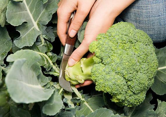 A brokkoli nemcsak a fehérjékkel, hanem C-vitaminnal is gyorsítja az izomépítést.