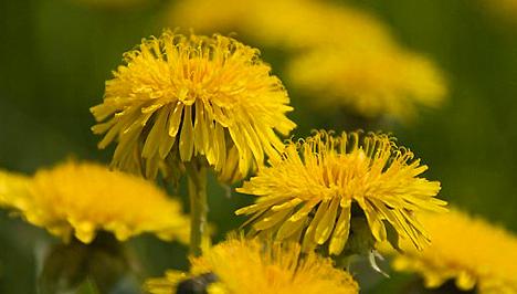 A 3 leghatásosabb anyagcsere-pörgető növény - Fogyókúra..
