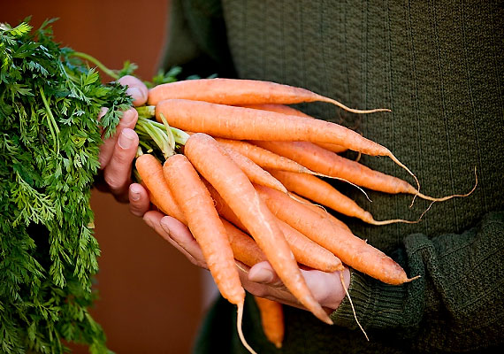 Az A-vitamin több anyagcsere-folyamat katalizátora, ami lényeges tulajdonság a fogyókúra szempontjából. Szervezeted a sárgarépából nyert béta-karotinból tudja előállítani.