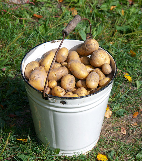 Burgonya  A krumpli szintén azok közé a szavak közé tartozik, melyek hallatán a fogyókúrázókat kiveri a víz. Pedig, ha nem bő olajban sütöd, hanem főzöd, párolod, esetleg grillezed, a krumpli egy laktató, energiát adó, emésztésserkentő finomság lehet.