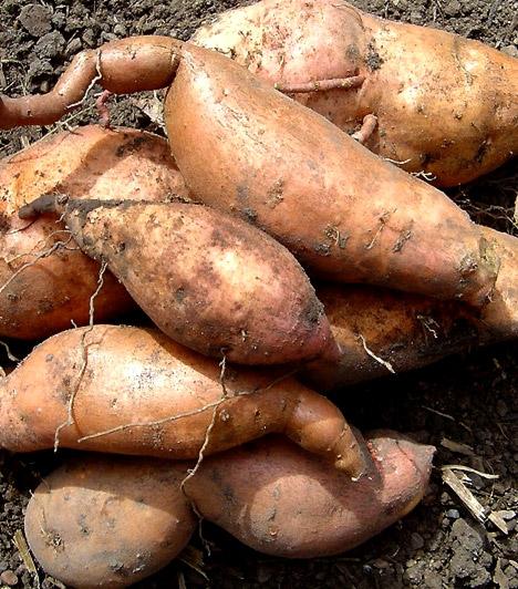 Édesburgonya  Az alacsony glikémiás indexű ételek nem terhelik meg a szervezet inzulintermelését, és a folyamatosan egyensúlyban tartott vércukorszint mellett nem törnek rád falásrohamok. Az édesburgonya glikémiás indexe alacsonyabb, mint a hétköznapi krumplié, így fogyasztása ajánlott, ha diétázol.  Kapcsolódó cikk: Így adj le 10 kilót! - Zsírbontó, izomépítő diéta »