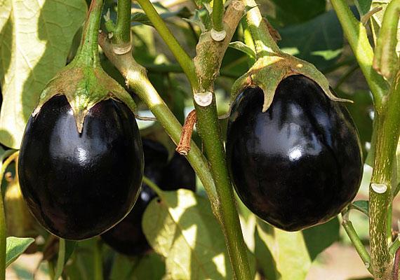 Csakúgy, mint a legtöbb friss zöldség, a padlizsán GI-értéke is 15 pont alatt van. Próbálj ki egy könnyű, nyári padlizsános receptet!