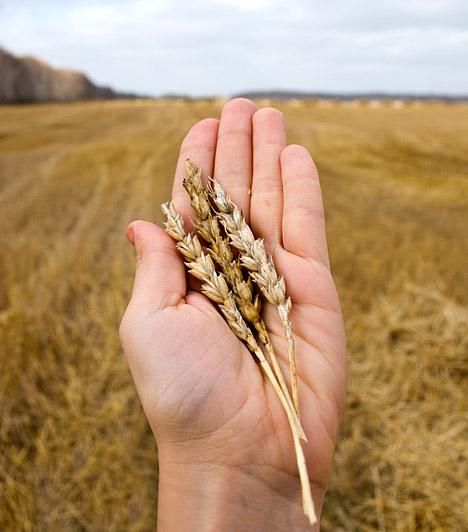 Tönköly  A tönköly az egyik legmagasabb fehérjetartalmú gabonaféle. Magas rosttartalmának köszönhetően tisztítja a beleket, emellett pedig jó hatással van az idegrendszerre, és csökkenti a koleszterinszintet. Főzés előtt érdemes egy fél napra beáztatnod, hogy könnyebben kioldódjanak a benne található tápanyagok.