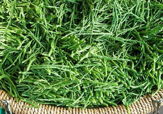 A teljes tápértékű étrend-kiegészítőként is alkalmazott zöldmoszat számos antioxidánst, vitamint és nyomelemet tartalmaz, továbbá erős méregtelenítő és lúgosító hatással bír, segít eltávolítani szervezetedből a stresszhatás következtében felhalmozódott savak melléktermékeit. Ismerd meg a Spirulina alga gyógyhatásait!