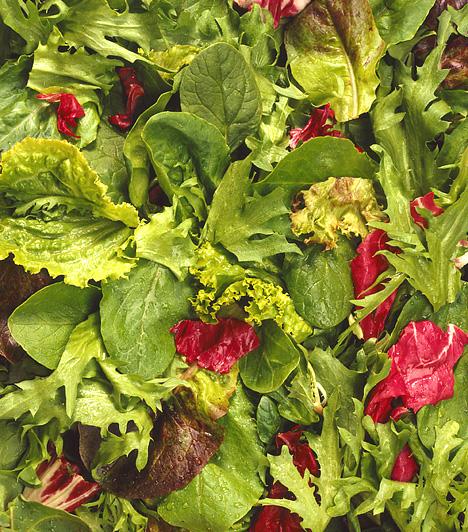 Vitaminok, ásványi anyagok                         A megfelelő anyagcsere-működéshez is nélkülözhetetlenek egyes vitaminok és ásványi anyagok, például a magnézium, a cink, a C- vagy a B-vitamin. A zöld leveles zöldségekben utóbbiak mind megtalálhatók.                                                  Kapcsolódó kvíz:                         Zsírégető vitaminok: ebben a 7 ételben van a legtöbb »