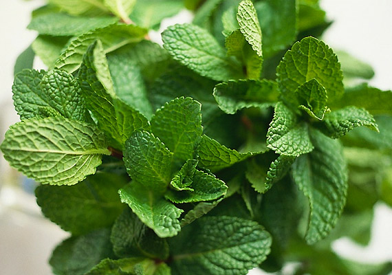 A borsmentalevélből készült tea alkalmas különböző emésztési zavarok enyhítésére, a fogyás beindítására. Hatását már az emésztőrendszer felső szakaszán, illetve az epevezetéknél kifejti.