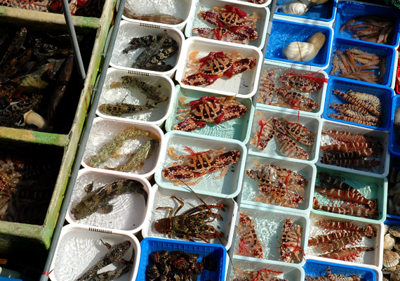 A halak és tenger gyümölcsei ugyancsak gyakran szerepelnek az indonéz étlapon. Természetesen mindent frissen, minél kevésbé feldolgozott formában fogyasztanak. Korábbi cikkünkből megtudhatod, hogyan segít a halfogyasztás megőrizni az alakot.