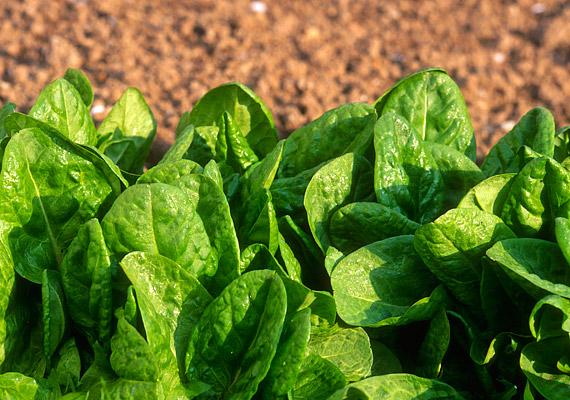 A sóska savanykás ízét a benne található oxálsav adja, amely segíti az emésztést, gyorsítja az anyagcserét, hatékonyan támogatja a fogyókúrát. Próbáld ki a sóskadiétát!