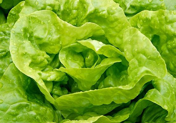 A fejes saláta rosttartalma révén serkenti az emésztés működését, emellett eltelít, és a salakanyagok eltávolítását is felgyorsítja.