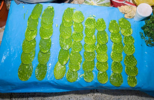 nopal kaktusz fogyás áttekintés