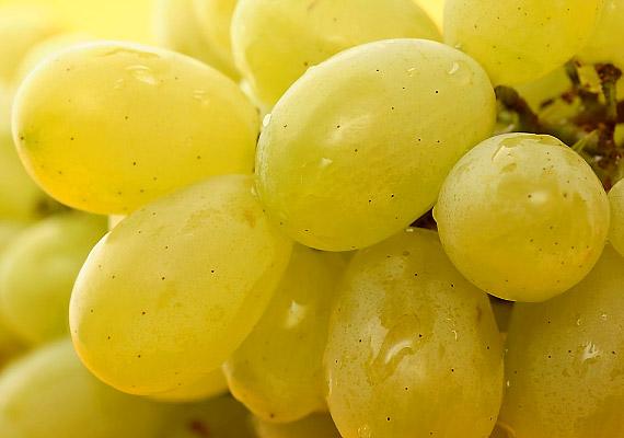 A szőlő viszonylag magas cukortartalommal bír, így nem kimondottan fogyókúrás csemege, ám fogyasztásával szabályozhatod szervezeted vízháztartását, tisztíthatod a vizeletkiválasztó szerveket, összességében méregtelenítheted a szervezeted.