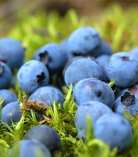 ÁfonyaA pektinben és csersavban bővelkedő áfonya emésztésserkentő és méregtelenítő hatásai elősegítik a fogyást, emellett nagyobb mennyiségű antioxidánshoz jutsz fogyasztásával.Kapcsolódó cikk:8 szuper diétás turmix »