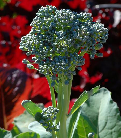 BrokkoliA főzve tálalt brokkoli magas ballasztanyag-tartalmának köszönhetően könnyen emészthető, fogyást serkentő étel. A zöldség további előnye magas vitamintartalma és rákmegelőző hatása.