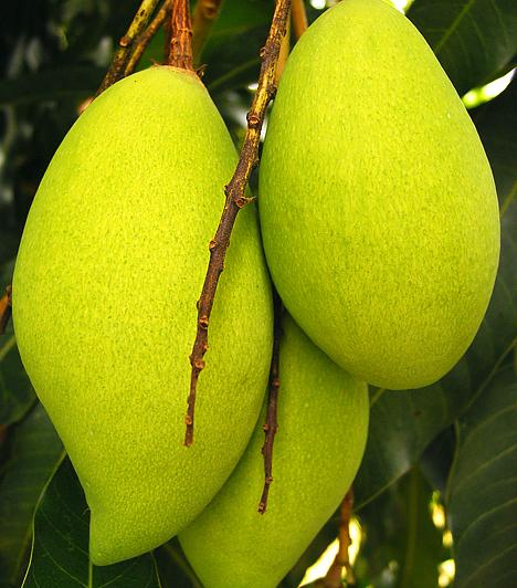 MangóA nyersen fogyasztott mangó magas rosttartalma révén jótékony hatással van az emésztésre, emellett segít megtisztítani szervezeted a káros salakanyagoktól is.Kapcsolódó cikk:Ezzel a 4 gyümölccsel fogyhatsz a leggyorsabban! »