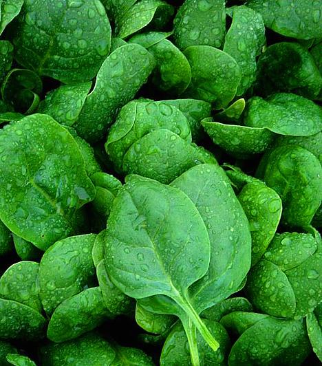 SpenótAz egyik leghatékonyabb negatív kalóriás étel nagy előnye, hogy sokféleképpen elkészítheted. Méregtelenítő hatása mellett magas magnézium- és kalciumtartalommal is bír, melyek a megfelelő anyagcsere-működést elősegítve elengedhetetlenek a hatékony fogyókúrához.Kapcsolódó cikk:A 4 legfinomabb spenótos recept »