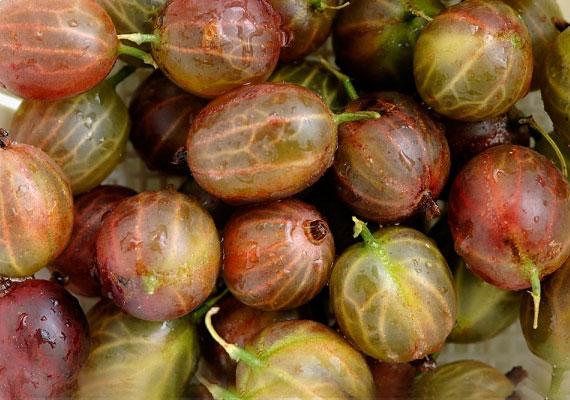 Száz gramm egres mindössze 40 kalóriát tartalmaz, a gyümölcsöt elsősorban szósz formájában fogyasztják. Nyersen is érdemes azonban megkóstolnod, hiszen a savanykás növény sok A-, B1- és C-vitamint tartalmaz, valamint magas rosttartalmának köszönhetően is támogatja a diétádat.