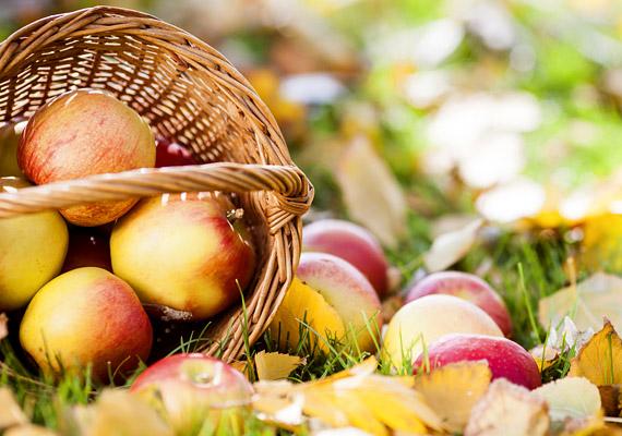 Almát egész évben kaphatsz a piacon, ám ősszel juthatsz hozzá a legfrissebb gyümölcsökhöz. Pektintartalmának, illetve a benne lévő gyümölcssavaknak köszönhetően kiegyensúlyozottá teszi az emésztést. Ezen kívül rosttartalmával is jelentősen hozzájárul a fogyókúra sikeréhez. Próbáld ki diétában!