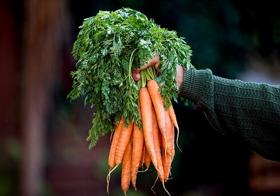 A sárgarépa remek salaktalanító alternatívája lehet az édes nassoknak. Nyersen fogyasztva a leghatásosabb.