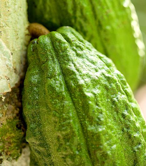 Papaya  Ez a különleges trópusi növény olyan enzimeket - papain - tartalmaz, melyek megkönnyítik a tápanyagok megemésztését. A gyümölcs magas rosttartalma felgyorsítja emésztési folyamataidat, így megtisztítja szervezetedet a káros anyagoktól.