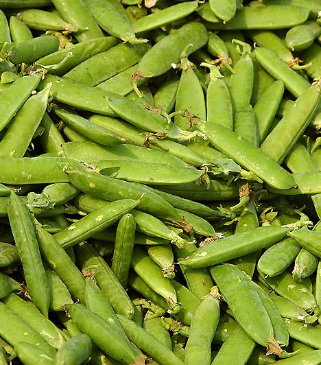 ZöldborsóA borsó vitaminokban és fehérjében gazdag zöldség, mely jótékony hatással van izmaidra és anyagcsere-folyamataidra. Emellett erős méregtelenítő hatással bír, és B-vitaminban gazdag, mely idegrendszered és anyagcseréd egészséges működését is biztosítja.