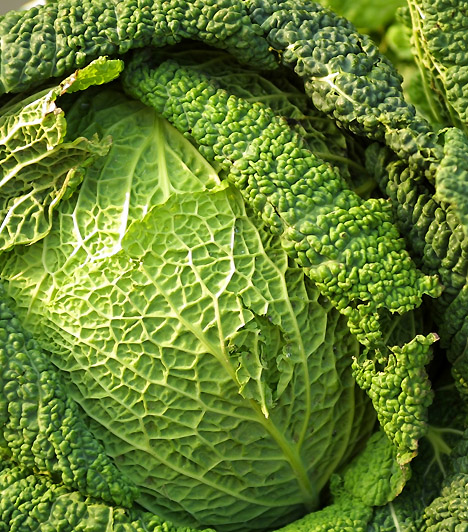KáposztaA káposzta hatékony vízhajtó, emellett egészséges bélflórádat is helyreállíthatod segítségével. C-vitamin-tartalma segíti az anyagcsere-működést, antioxidánsai pedig csökkenhetik a rákos megbetegedések kialakulásának kockázatát.Kapcsolódó cikk:3 hatékony zsírégető, salaktalanító zöldség »