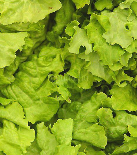 Fejes salátaA fejes saláta az egyik legalacsonyabb kalóriatartalmú tavaszi zöldség, fogyasztása pedig a közvélekedés szerint elengedhetetlen a fogyókúra során. Rosttartalma miatt gyorsítja emésztésedet, továbbá növeli tested védekezőképességét, és meggátolja a szabadgyökök keletkezését is.