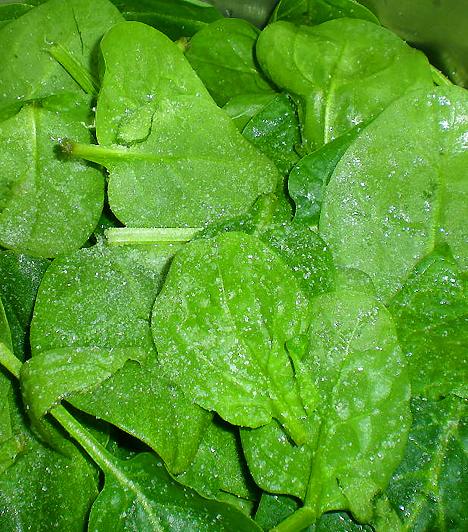 SpenótA spenót rendkívül vitamindús zöldség, mely igen gazdag flavonoidokban, így segít megelőzni a daganatos betegségeket. Magas B-vitamin-tartalmának köszönhetően felgyorsítja anyagcserédet, magas rosttartalma pedig serkenti az emésztési folyamatokat.
