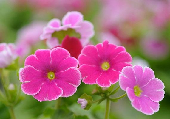Egyes növények a bőrhöz érve irritációt, a bélrendszerbe kerülve hányást, hasmenést, sőt, akár légzési nehézségeket vagy bénulást is okozhatnak.